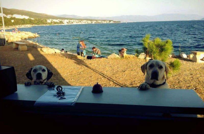 Kad je vruće i psi bi popili pivo (Foto: Uz dopuštenje Monty's Dog Beach and Bar-a)